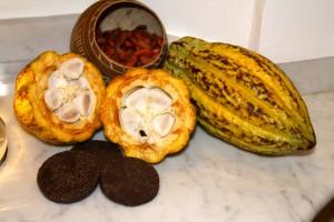 les différentes étapes de la fève de Cacao